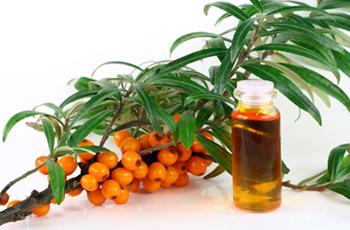 vaistinės šaltalankių savybės esant hipertenzijai)